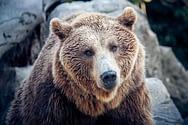 Bitcoin-Prognose 2019: Ein langer Bärenmarkt